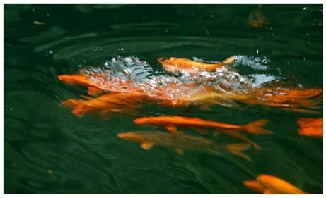 洪水来临前动物征兆的图片