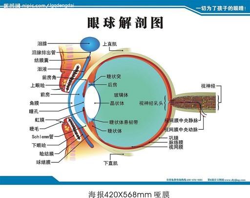 眼睛能暴露出十種病